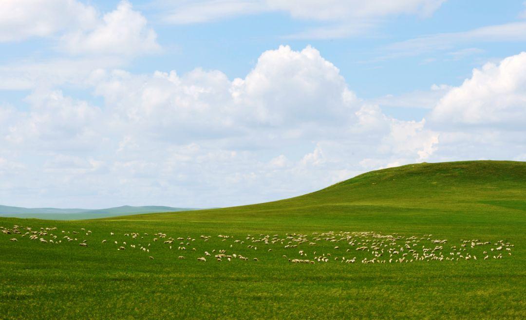 旅行|感受独具一格的乌拉盖草原