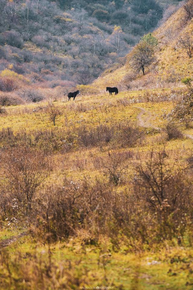 甘谷这片草原,秦人先祖大骆的小儿子赢非子曾在这里放牛牧马