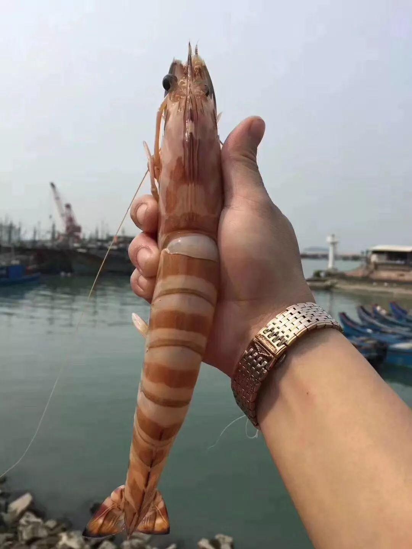 来自东山岛的野生海鲜竟可以全揭阳配送上门!人均50+渔港搬到你