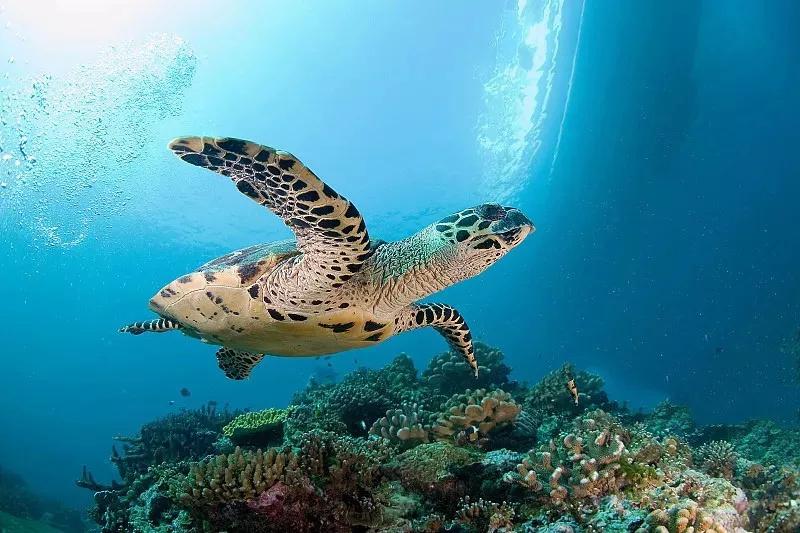 全部�:-f_知深潜:长滩岛重新开岛;斯米兰开岛,岛宿全部取消;印尼客机凌晨坠毁