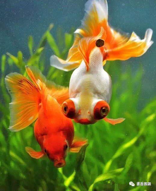 纪小燕 我想变成一条鱼