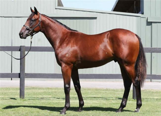 """Aquis Farm雅士牧场在新加坡开启成功大门:出售马匹"""""""