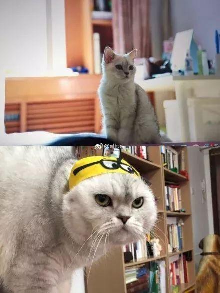难道大眼不可爱吗:我家的也是 才一年,小奶猫变成变态大叔 个个都是图片