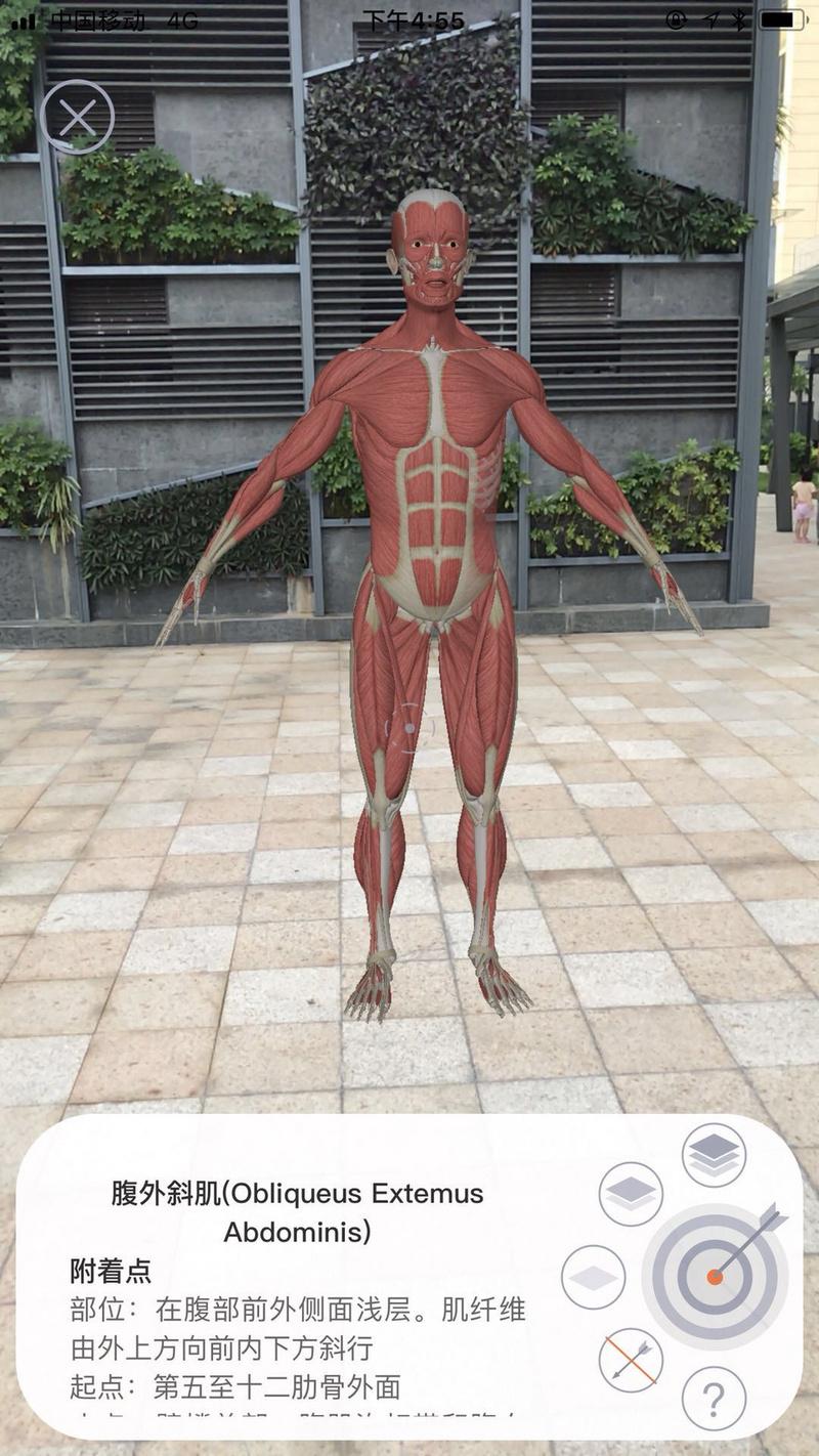 上线4月冲到iPad健康排行榜第一,「运动解剖」想