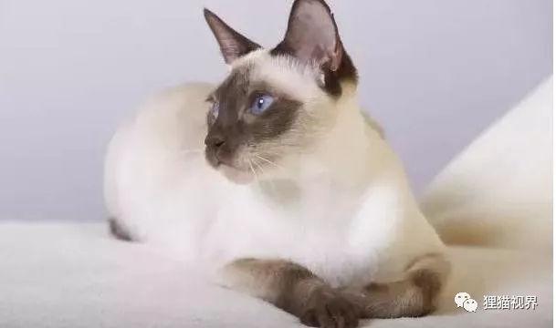 猫咪吃维生素e的好处图片