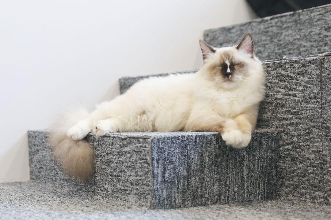 撸经典小�_就可以泡在二楼开始撸猫啦!12只小宝贝喵喵们每只都有每只的个性