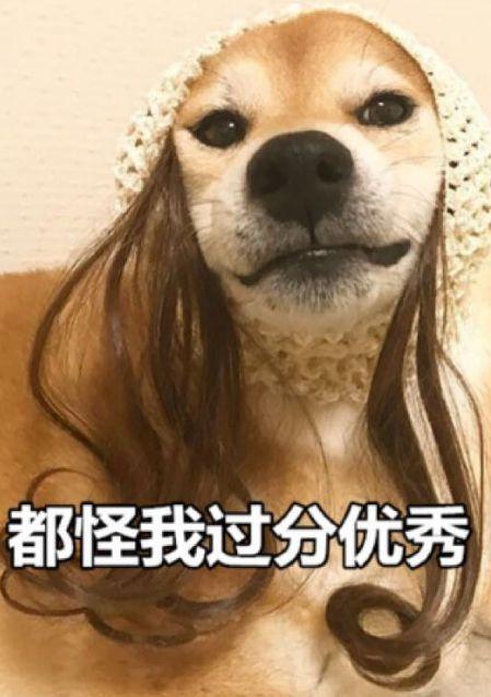 我就是舍得给狗花钱,又怎样?!