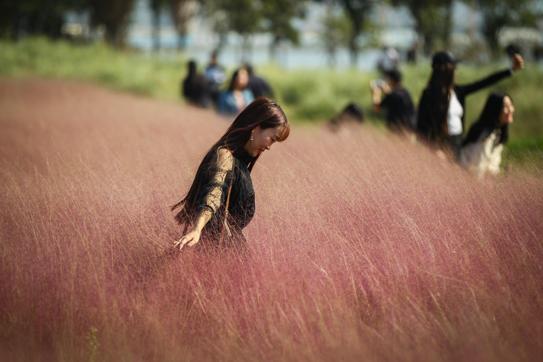 当网红粉黛花海变为一片狼藉 是游客素质问题还是管理不到位?