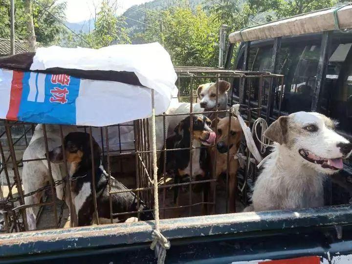 杭州3个大叔带着6只狗和一条乌梢蛇进山,竟是为了抓价值万金的……