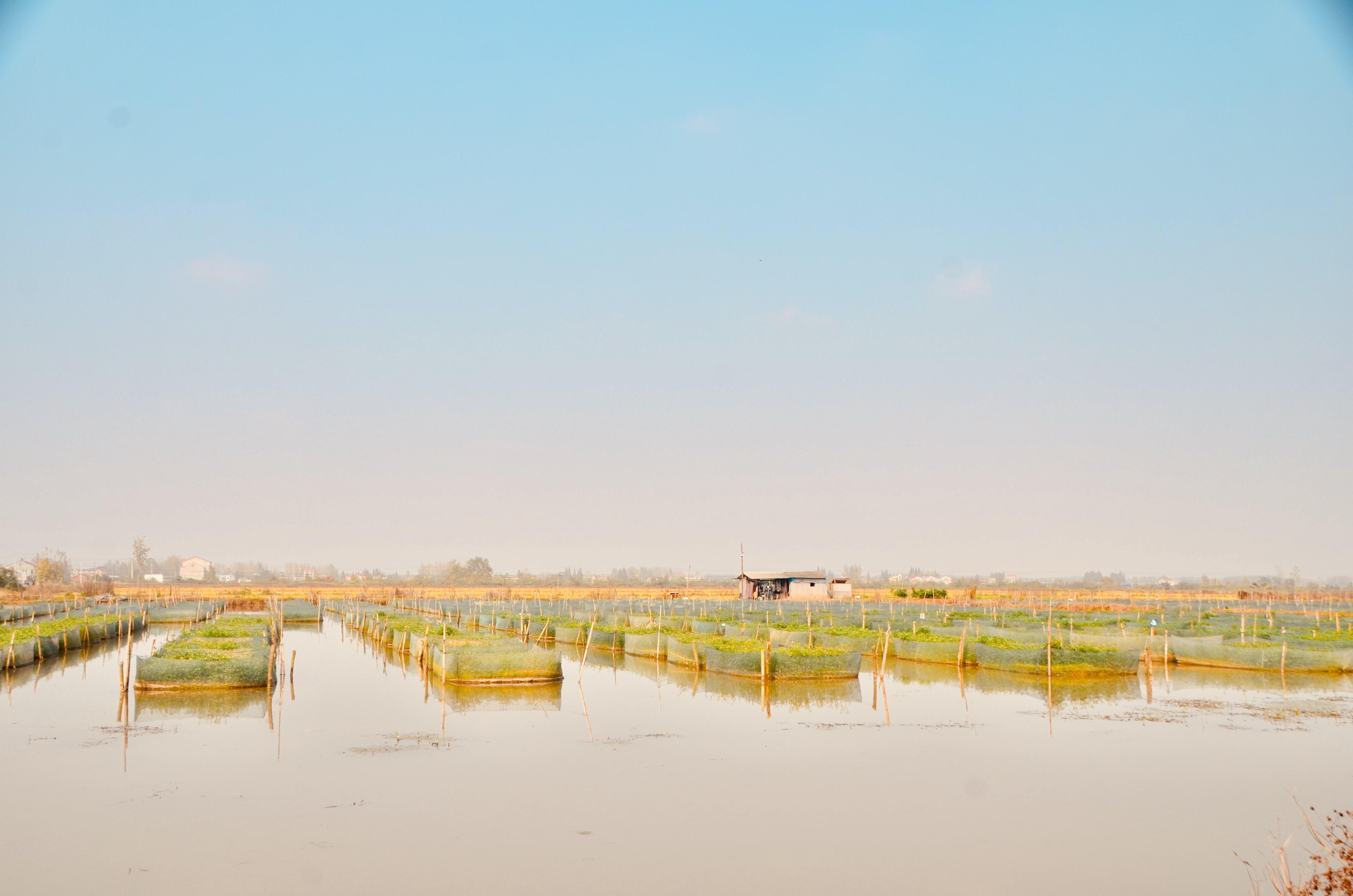 中国小龙虾第一县:产量连续6年全国第一,全国小龙虾1/7出自这