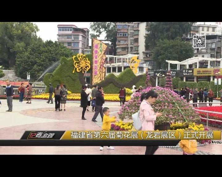 福建省第六届菊花展龙岩展区正式开展····