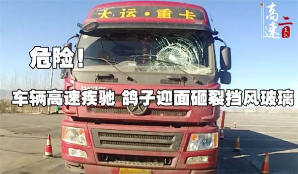 危险!车辆高速疾驰 鸽子迎面砸裂挡风玻璃
