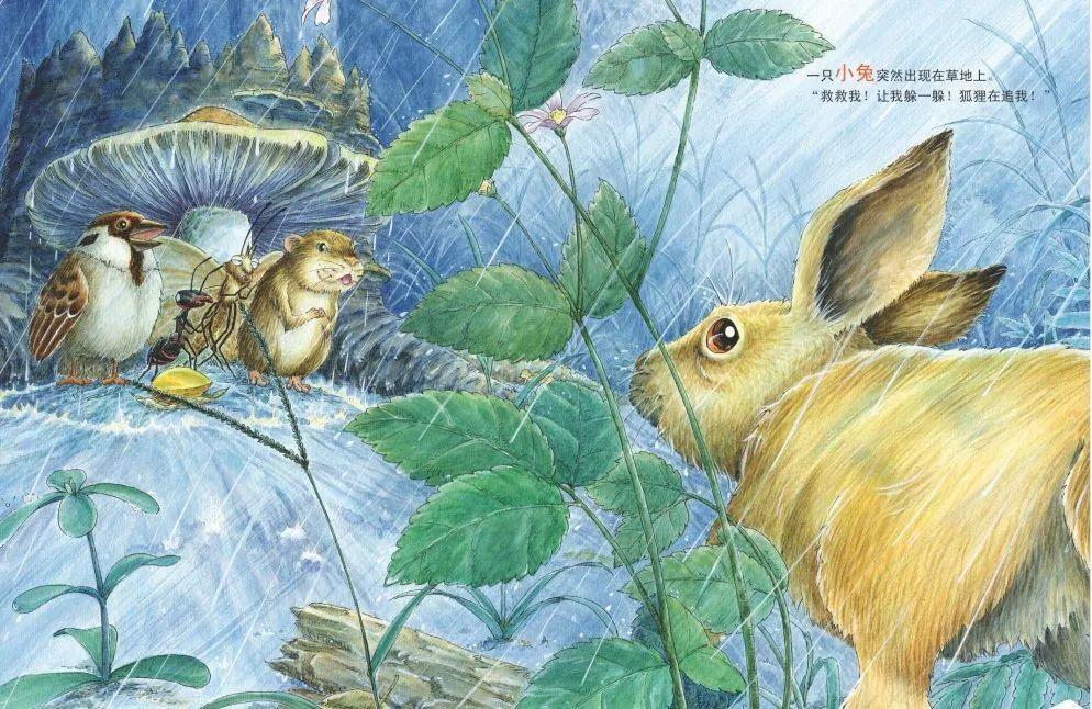 地方里下起了舞蹈,小蜗牛到处找森林发现,突然躲雨蘑菇下躲雨.大雨视频蚂蚁考三级图片