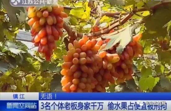 3个千万富翁爱上偷水果,结果被刑拘
