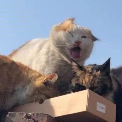 围墙上三只流浪猫乱入,给它们拿些猫粮,猫咪表情绝了:太哇塞了图片