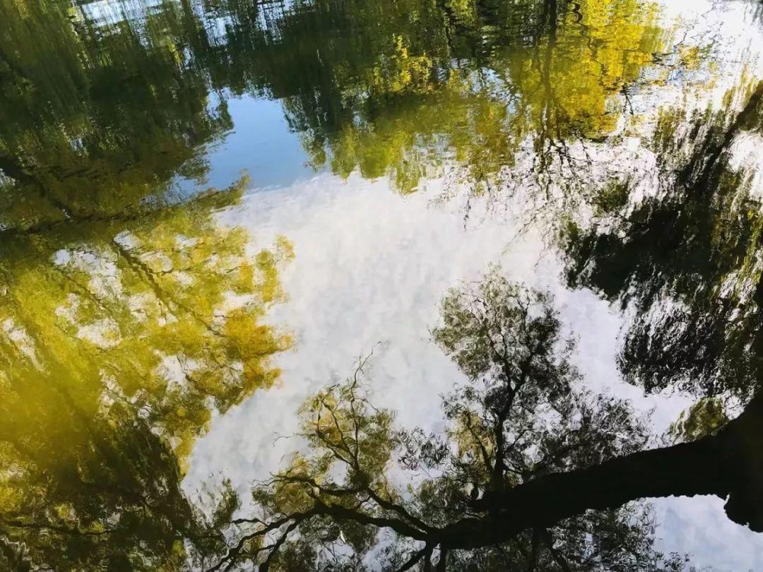 圆明园金秋风景美如画,快来散步赏景呀!