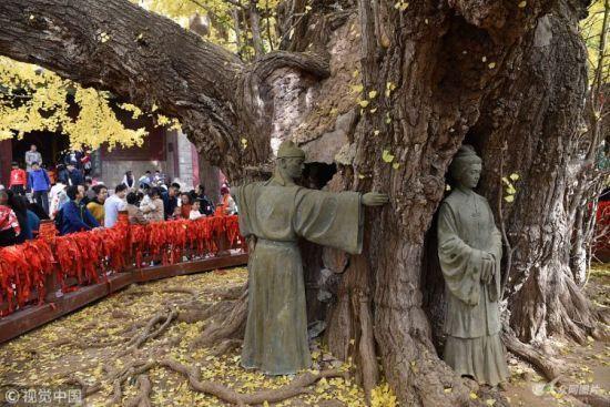 """日照资源网山东日照:4000年银杏树""""黄袍加身""""盛装迎客"""