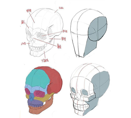 【经验】绘画零基础怎么画好人物脸型?