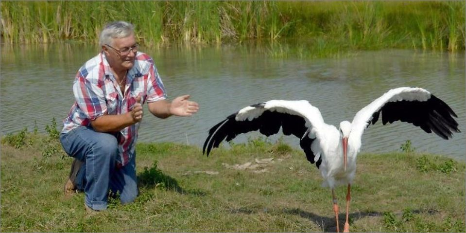 超感人:一对鸟夫妻的真实故事