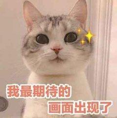 同比增长344% 雅阁引领中级车复苏_云南快乐十分开奖结果