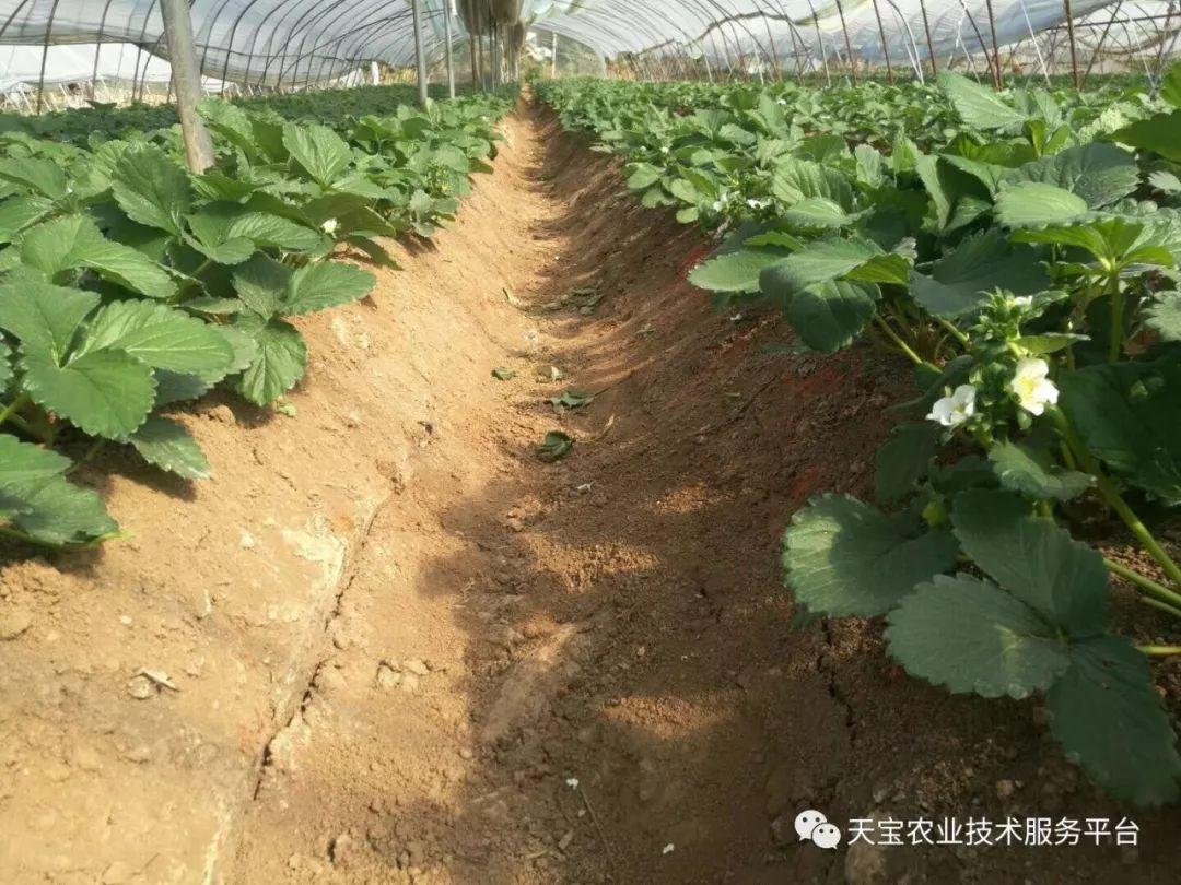吸草莓的原理_水果味吸管的原理价格 水果味吸管的原理批发 水果味吸管的原理厂家