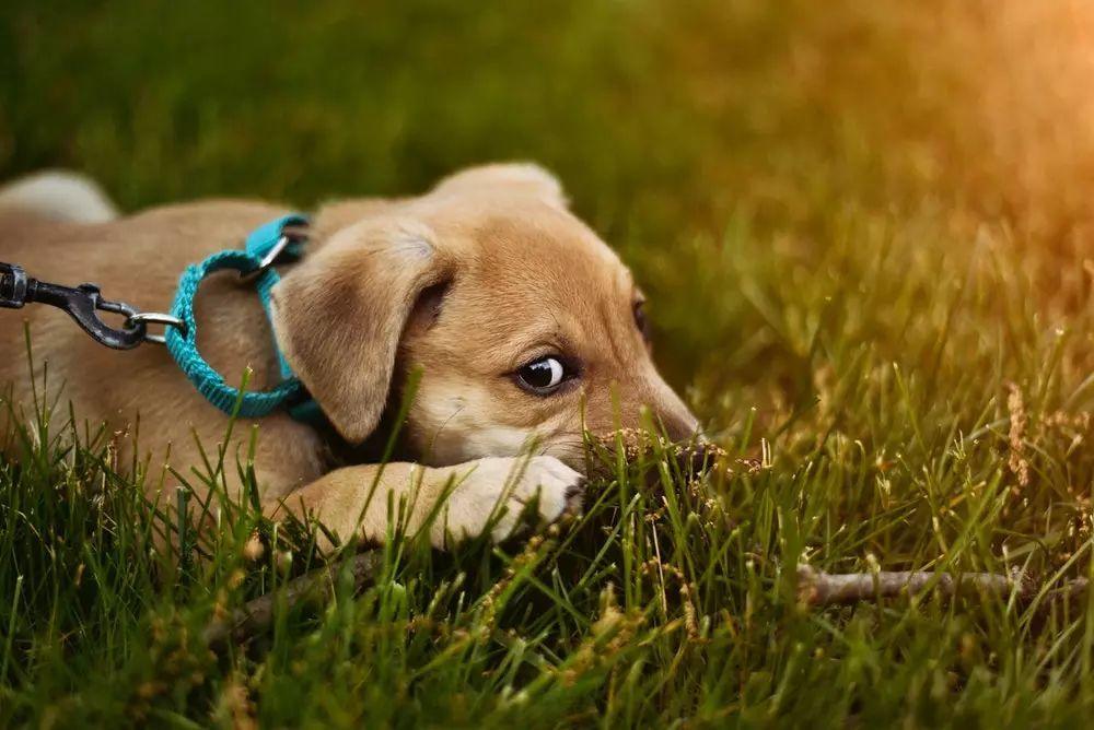 的_遛狗不牵绳的男人,把保护孩子的妈妈打到骨折!他的狗会安乐死吗?