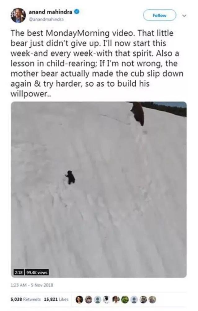 辟谣!刷屏的小熊爬雪山视频,大火背后却是反转?