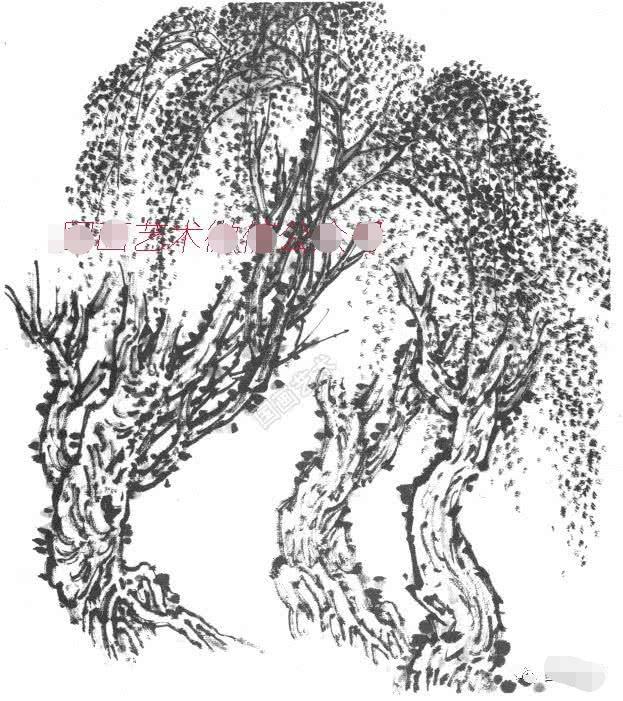 畫春柳首先要以中鋒側鋒并用畫老干,然后用中鋒畫柳枝和柳條.圖片