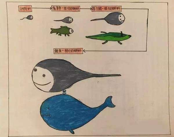 小学生都在学的思维导图究竟是啥玩意