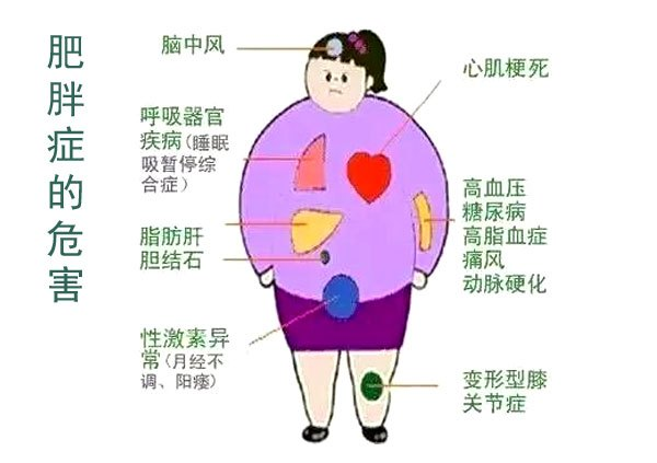 内脏脂肪怎么减