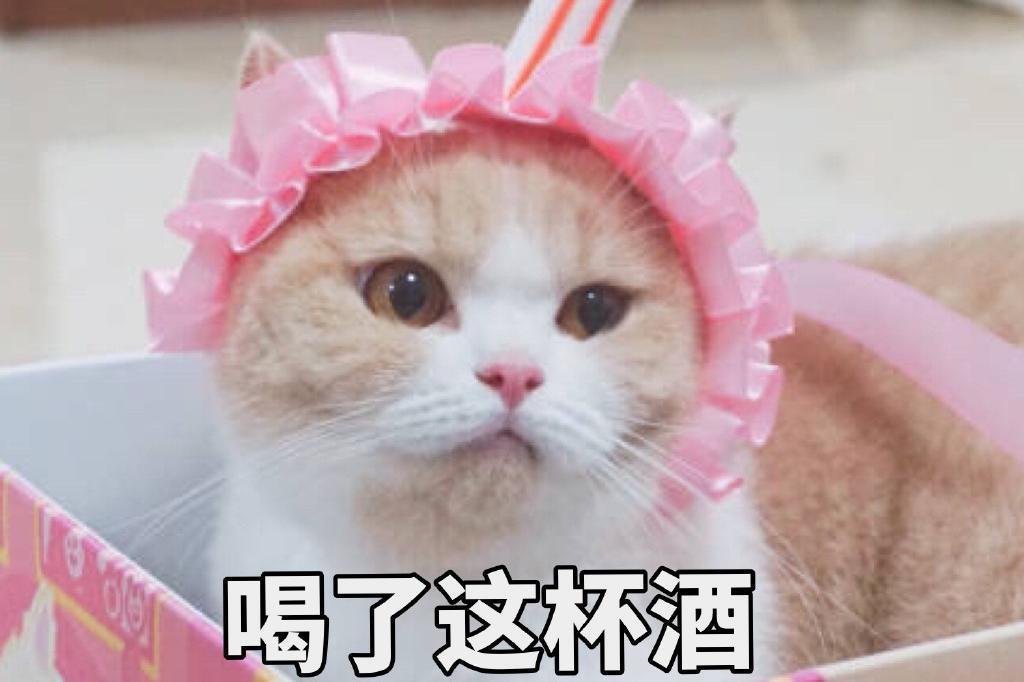 猫咪萌萌表情包:你的小可爱小北鼻正在生气