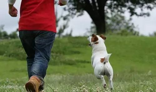 【时评】建议城市住宅小区禁止养狗!
