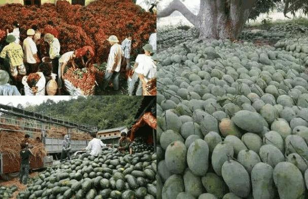 此国水果堆积成山, 中国立马进口数万吨! 泰国: 中国偏心