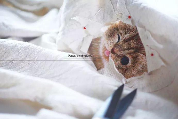 撸经典小�_一只灰咖色的小奶猫