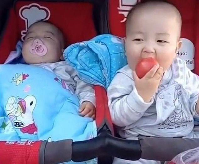弟弟趁雙胞胎哥哥睡著,獨吞媽媽買的西紅柿,得意的小表情笑噴了