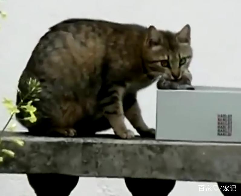 流浪貓聽到一聲微弱的貓叫後,發瘋一樣的尋找,它的孩子回來了! 萌寵 第2張