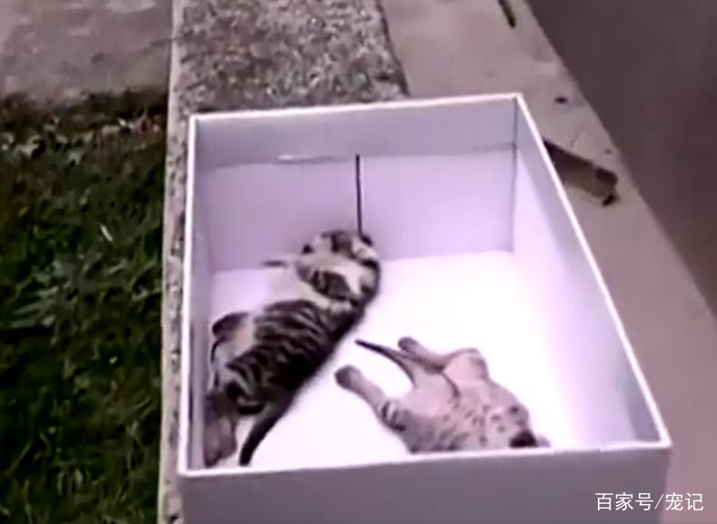 流浪貓聽到一聲微弱的貓叫後,發瘋一樣的尋找,它的孩子回來了! 萌寵 第3張