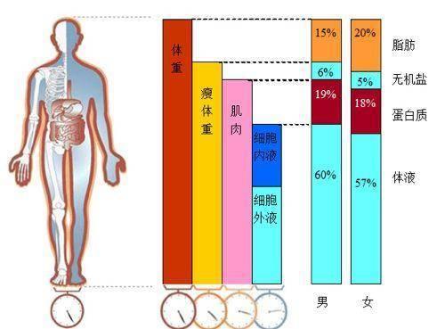 人体脂肪_体育 正文  体脂秤采用生物电阻抗法测量,其原理是人体内脂肪为非导电