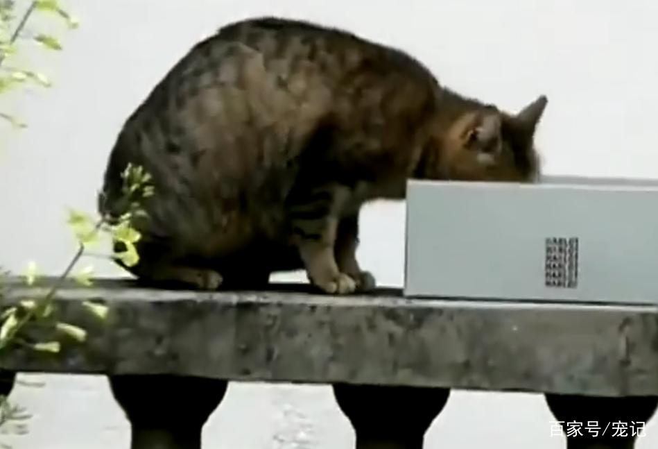 流浪貓聽到一聲微弱的貓叫後,發瘋一樣的尋找,它的孩子回來了! 萌寵 第1張