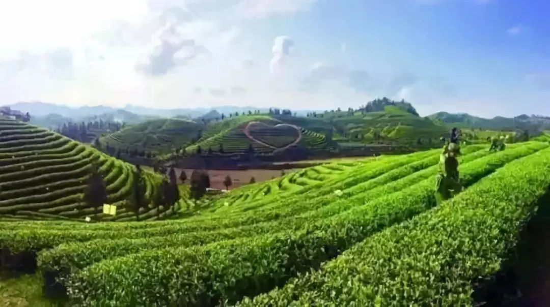旅游 正文  吸一口茶散发的清香, 茶海之心景区位于凤冈县永安镇, 有