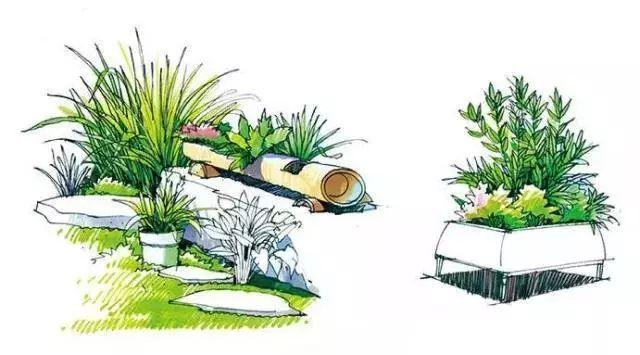植物生长手绘图