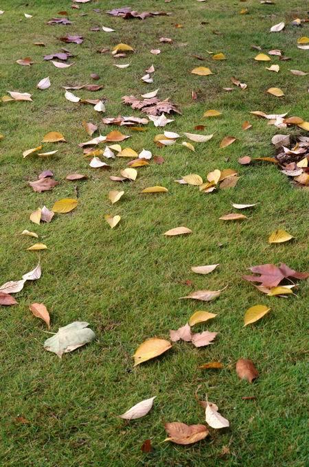 在光谷民族大道拥堵的喧嚣里,看见关山公园秋色愈浓!