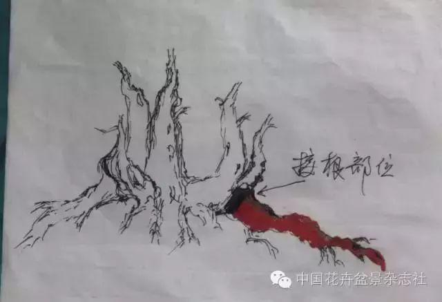原桩手绘图,红色为接根部位