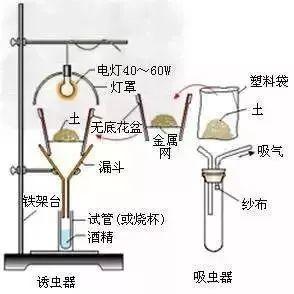 双铂电极安培法的原理