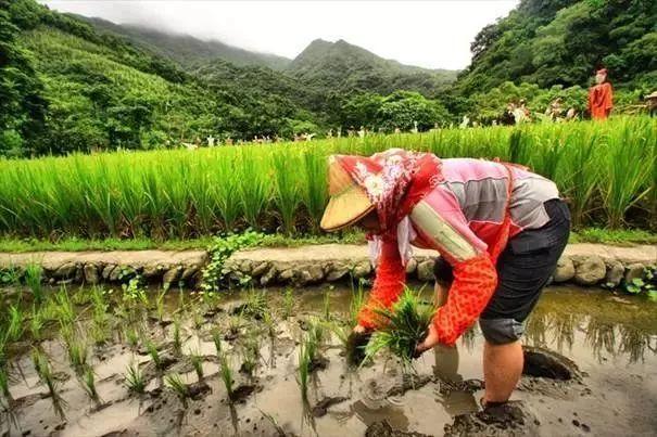 休闲农业如何经营?看台湾精致农业的启示!