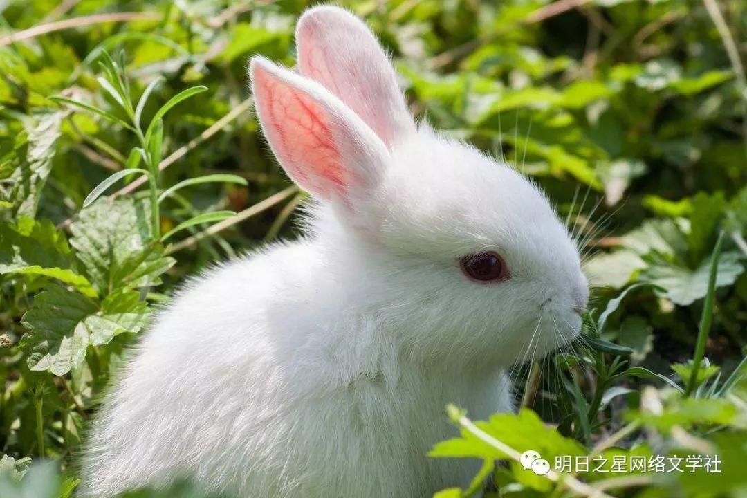 的_【湖南】 刘医晴 《可爱的小白兔》指导老师:刘葵花