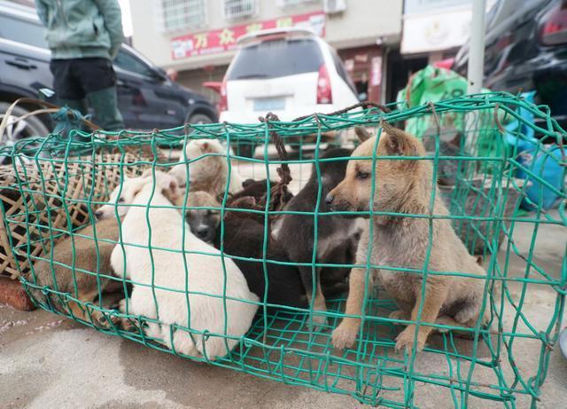 贵州大山里不一样集贸市场,山货很多也很独特,有趣是宠物论斤卖