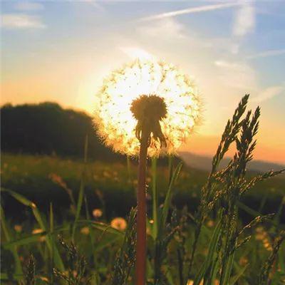 风景或花草的微信头像
