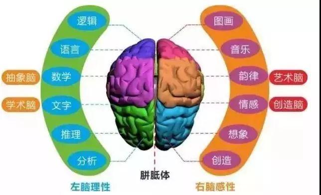 教育 正文  人类的大脑结构和功能分区如下图,传统的工具书其实不太图片