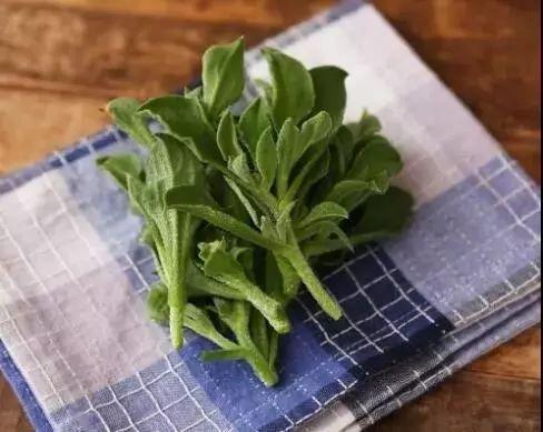生菜金融特色高值营养保健蔬菜:冰菜栽培技术